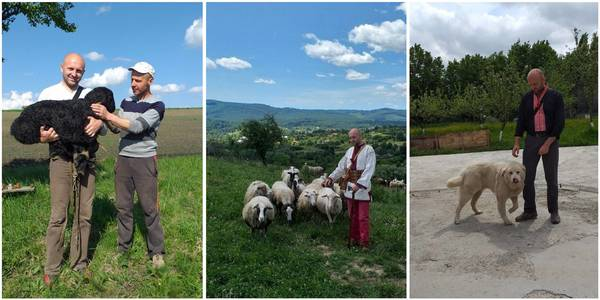 """Sheep breeding in the mountains must be revived. Only then will the Carpathian Mountains be self-sufficient and develop,"" Vasyl Stefurak, farmer, chairman of Shepherds' Association"