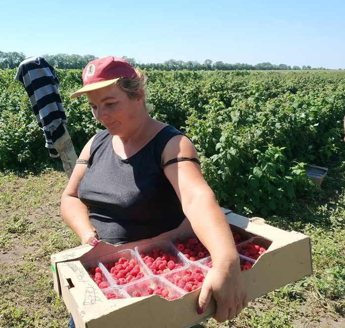 """First berry"" cooperative of Dnipropetrovsk Oblast: from small entrepreneurship to berry cluster"